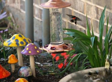2018-05-02 hummingbird1.jpg
