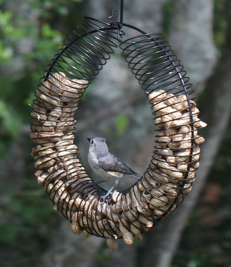 birds -titmouse1